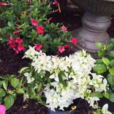 Spring is Here – Watering and Fertilizing Reminders
